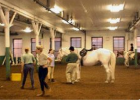 """<img src= """"horses.jpg"""" alt= """"riding academy with trainers and students in a ring"""">"""