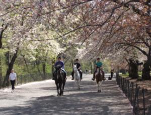 "<img src= ""horseback riders.jpg"" alt= ""horseback riders on bridle path in park"">"